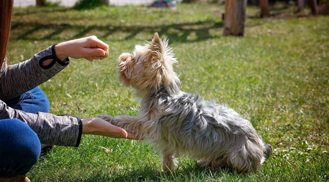 quali premi utilizzare per l addestramento del cane