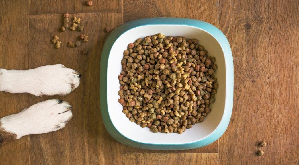 alimentazione-del-cane-la-guida-completa