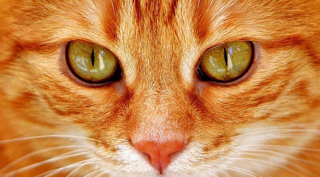 cosa sapere per adottare un gatto
