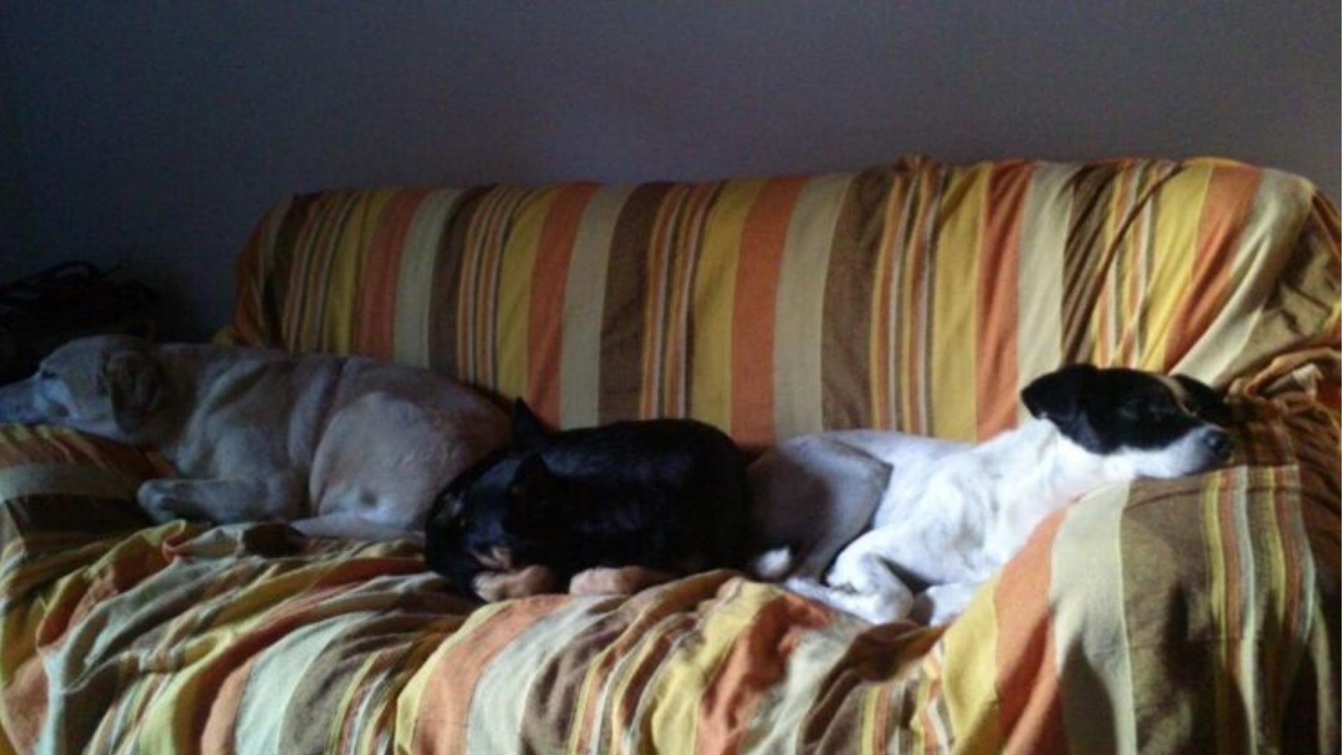 dove far dormire il cane