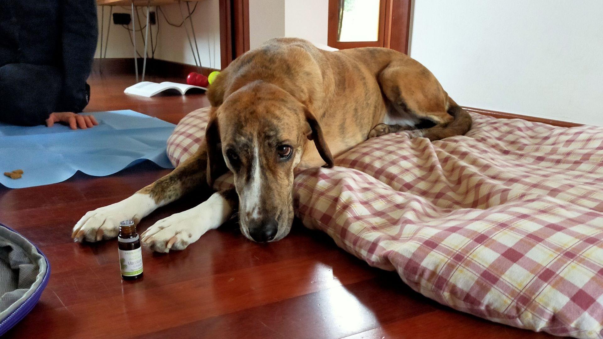aromaterapia-e-disturbi-comportamentali-nei-cani