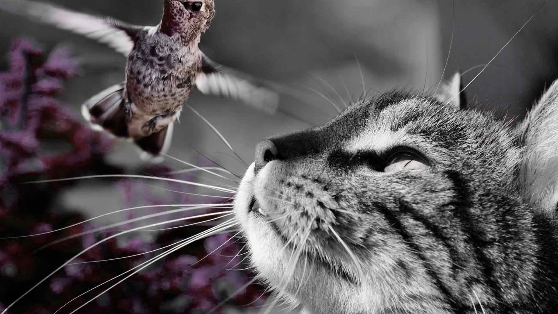 alimentazione-del-gatto-comprata-o-fatta-in-casa-1