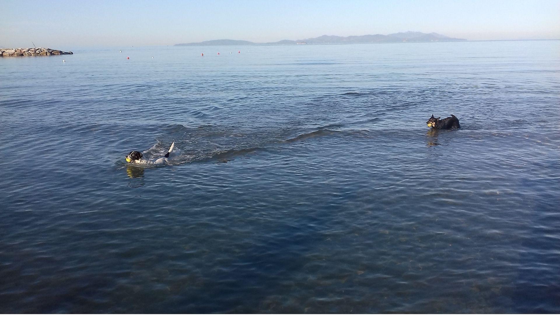 Al mare col cane, quali accorgimenti adottare